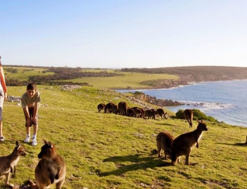 Kangaroo Island One Day Tour With Cruise