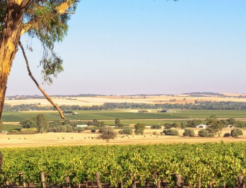 Grand Barossa Valley with Hahndorf Day Tour