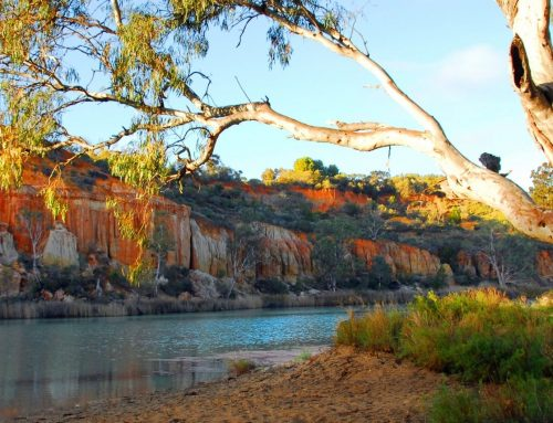 Riverboats On The Murray Day Tour